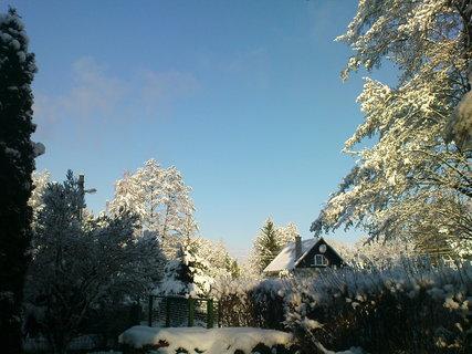FOTKA - ráno v zimě