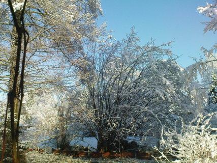 FOTKA - zima na zahradě