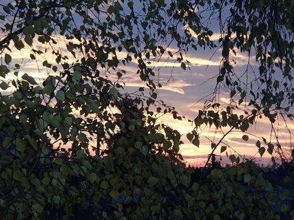 FOTKA - spoza stromu