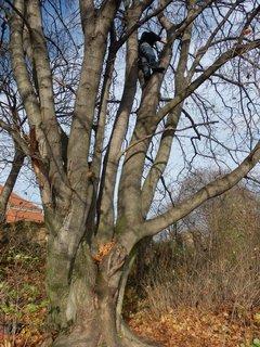 FOTKA - chlapeček na stromě