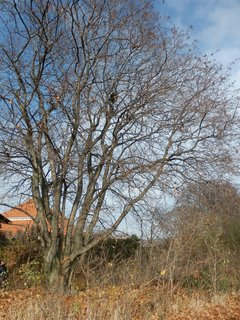 FOTKA - chlapeček na stromě - vidíte ho?