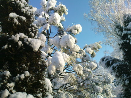 FOTKA - .zima
