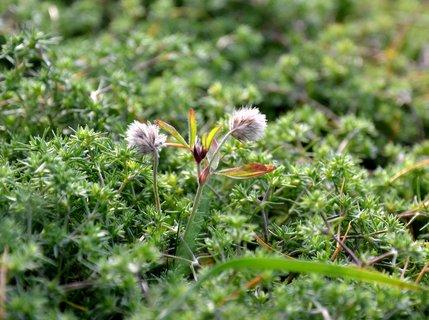 FOTKA - Listopadová zeleň