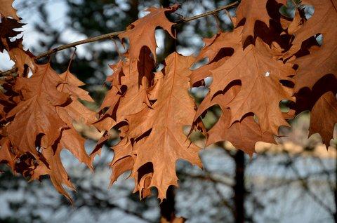 FOTKA - Listopadov� listy v z��i slunce