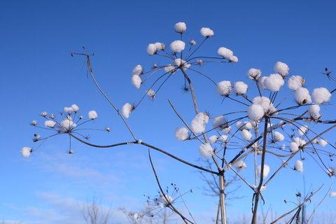 FOTKA - Květ zimy