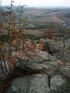 FOTKA - Jeřabina na vrcholu