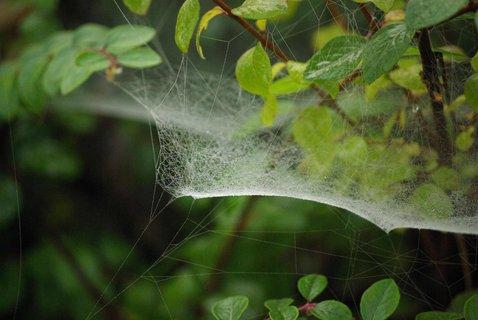 FOTKA - zajimava pavucinka