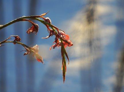 FOTKA - Omrzlá květinka u jezírka
