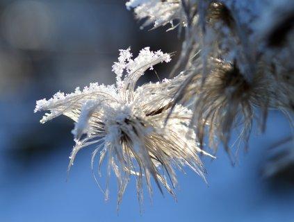 FOTKA - Omrzl� neu�esan�