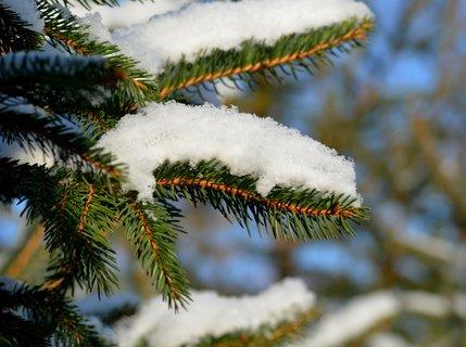 FOTKA - Sněhové zdobení smrčku