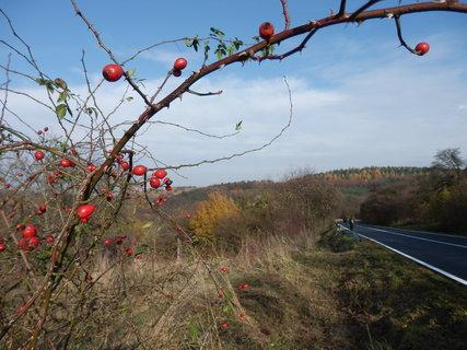 FOTKA - * z podzimních toulek