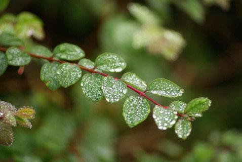 FOTKA - kapky rosy