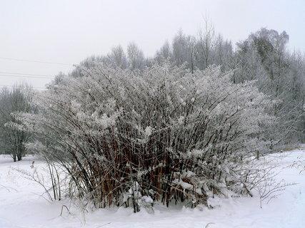 FOTKA - Sněhová peřina
