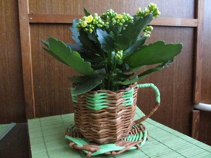 FOTKA - obal na květináč-hrneček