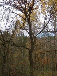 """FOTKA - tak se podívejte kam až leze... tam nahoře je totiž """"keška"""" (cache)....."""