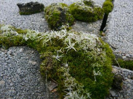 FOTKA - ledove krystalky na mechu