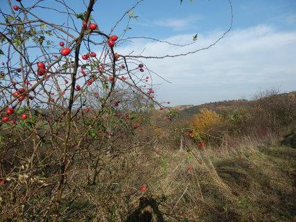FOTKA - z podzimních vycházek...