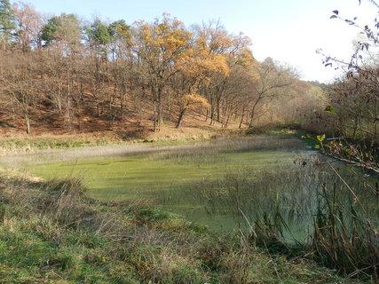 FOTKA - z podzimních vycházek...u zapomenutého rybníčku