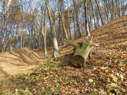 FOTKA - z podzimních vycházek...lesy kolem Kostelce