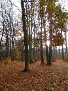 FOTKA - z podzimního toulání kolem Kostelce nad Černými lesy