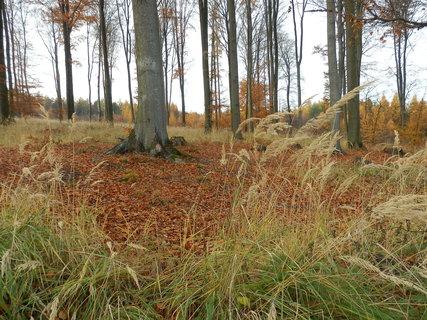 FOTKA - z podzimního toulání-  kolem Kostelce nad Černými lesy