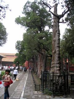 FOTKA - Čína, Peking 96