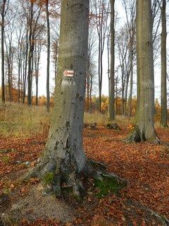 FOTKA - z podzimního toulání - okolí Kostelce nad Černými lesy