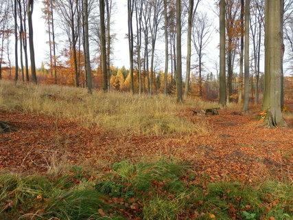 FOTKA - z podzimního toulání * okolí Kostelce nad Černými lesy