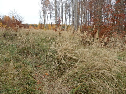 FOTKA - suchá tráva