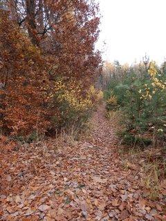 FOTKA - cestička zapadaná listím