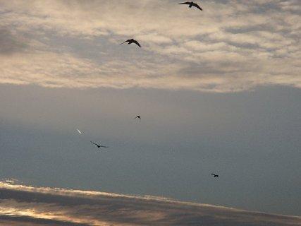 FOTKA - vtáci letia