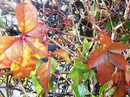 FOTKA - Podzim..23