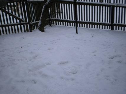 FOTKA - Zase sněží 6