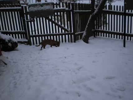 FOTKA - Zase sněží -7