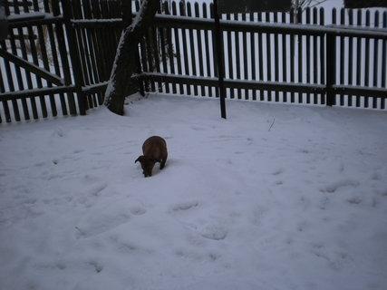 FOTKA - Zase sněží -8