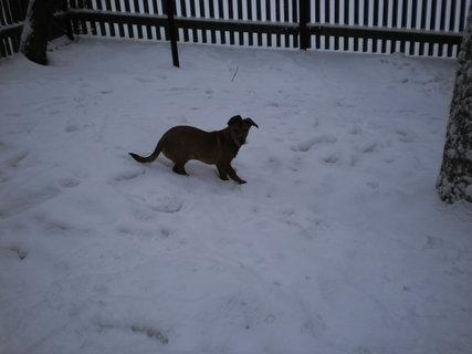 FOTKA - Zase sněží 9
