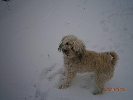 FOTKA - Na sněhu 1