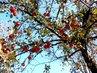 13.11. jablíček bylo ještě hodně zimních