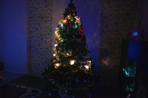 FOTKA - Christmas tree 5