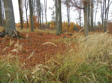 FOTKA - z podzimních toulek - bučiny