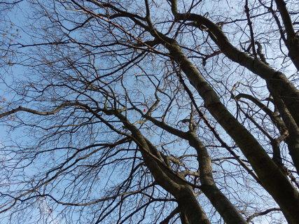 """FOTKA - ta oranžová tečka vysoko ve větvích je """"keška"""""""