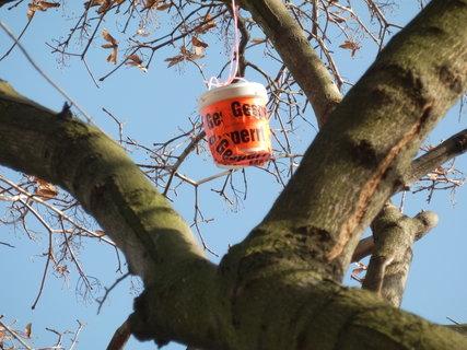 """FOTKA - k předchozí fotce (ta oranžová tečka vysoko ve větvích je """"keška"""") přiblíženo zoomem"""