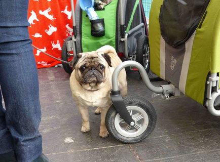 FOTKA - nejsem pate kolo u vozu