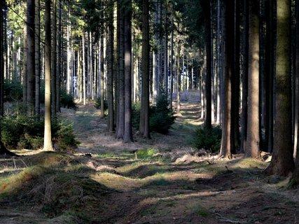 FOTKA - Lesní rozcestí