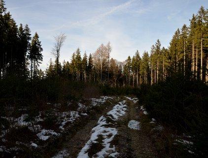 FOTKA - Silvestrovská procházka prosluněným lesem