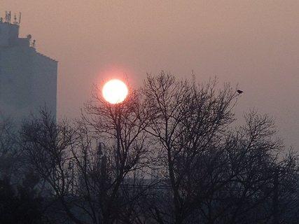 FOTKA - východ slnka a vrana na konári