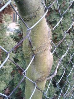FOTKA - stromek 3