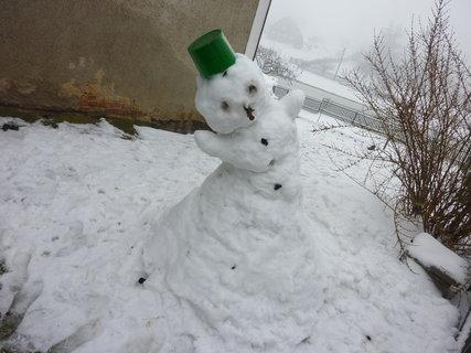FOTKA - sněhul. 2