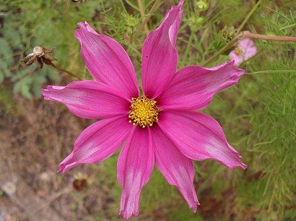 FOTKA - Květy 368