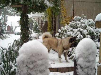 FOTKA - zima.4